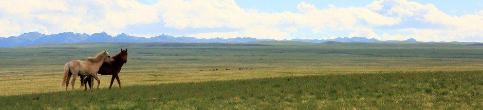 https://www.goyotravel.com/wp-content/uploads/2017/10/Goyo-Travel-Mongolia-Cultural-tours-Horseriding-camelriding-trekking.jpg