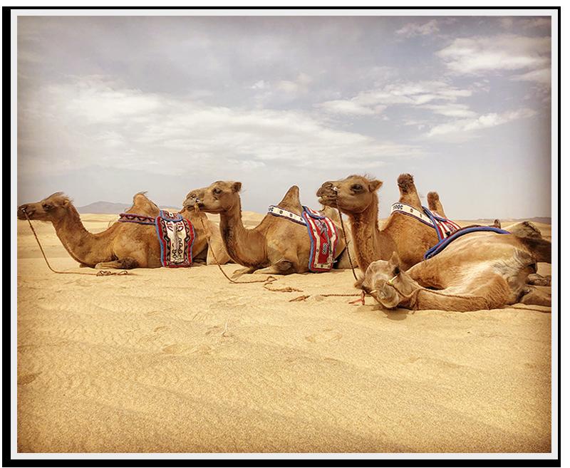Skeels-Camels