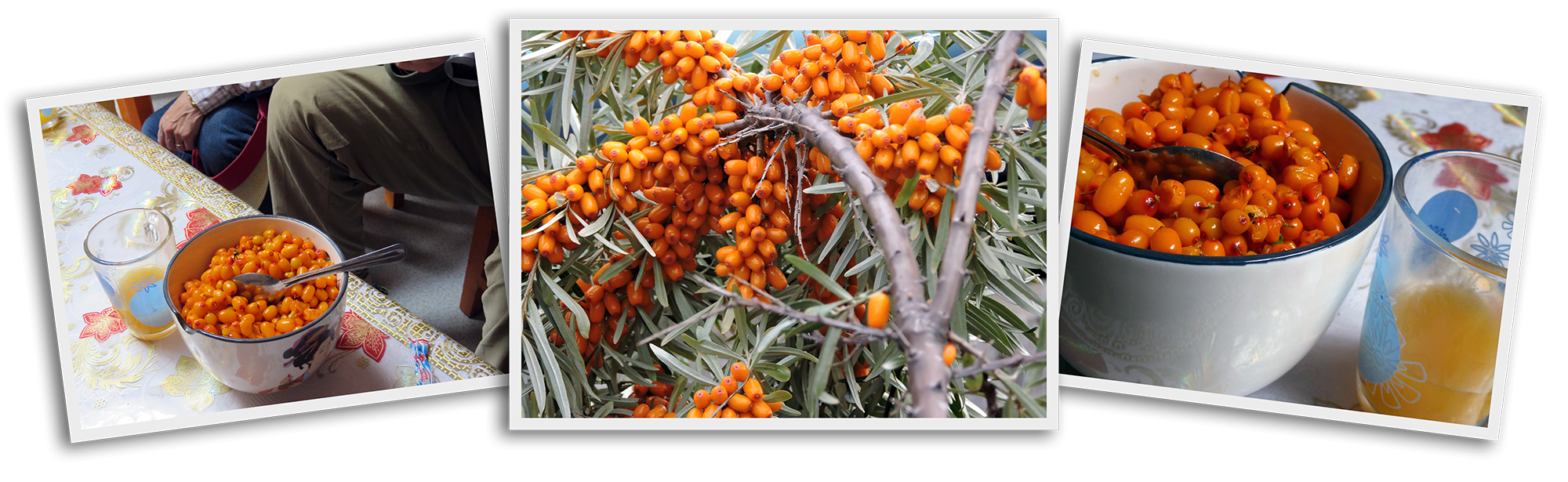 seabuckthorn-collage