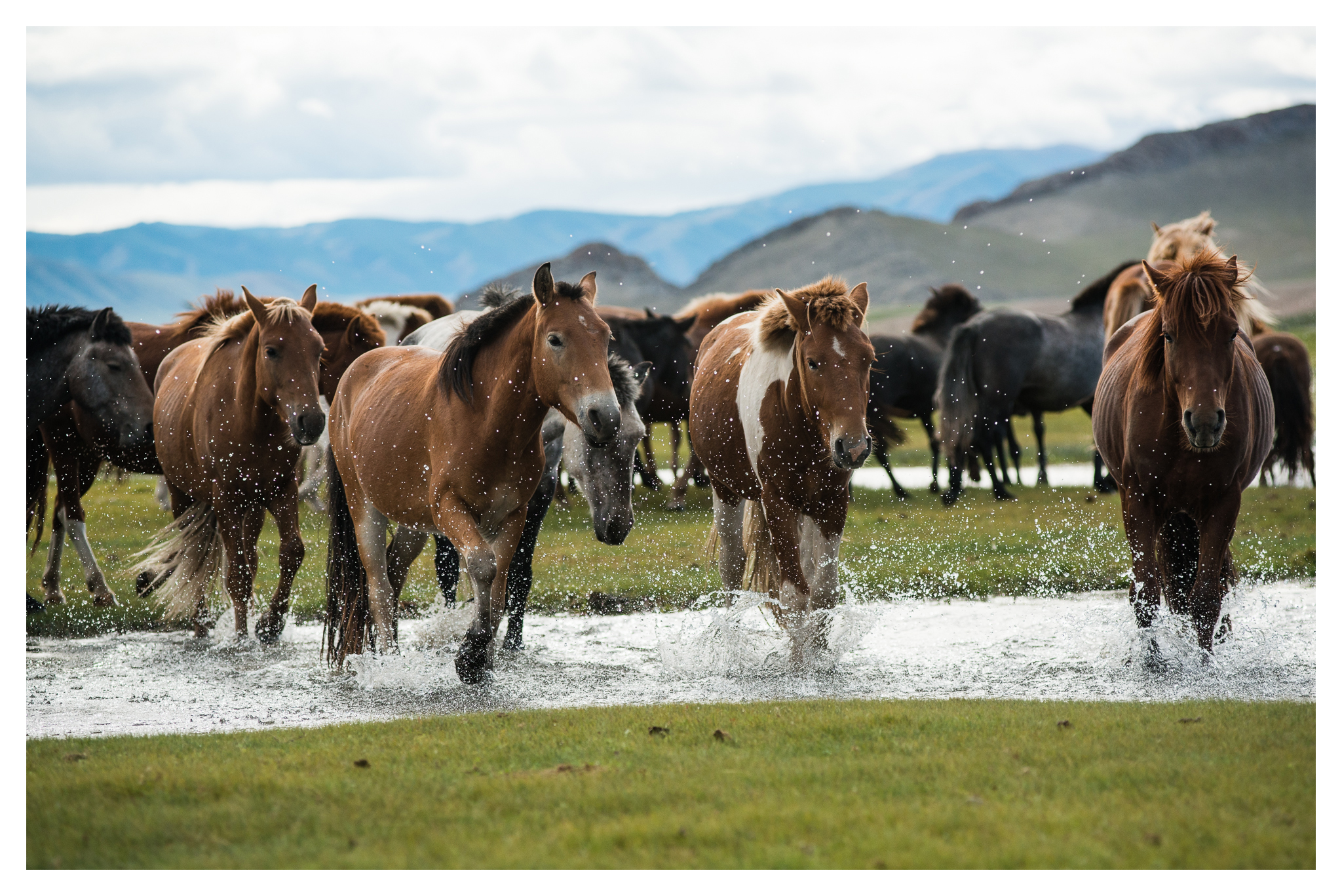 Horses Crossing A Stream